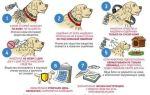 Как уберечь собаку от клещей?