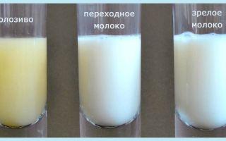 Чем отличается молозиво от молока