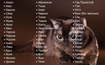 Как назвать кота?
